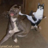 Funny Pictures of Cats and Dogs Fights